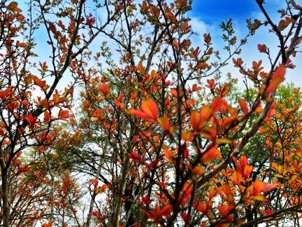 Spring Flowers - Fort Rucker, AL